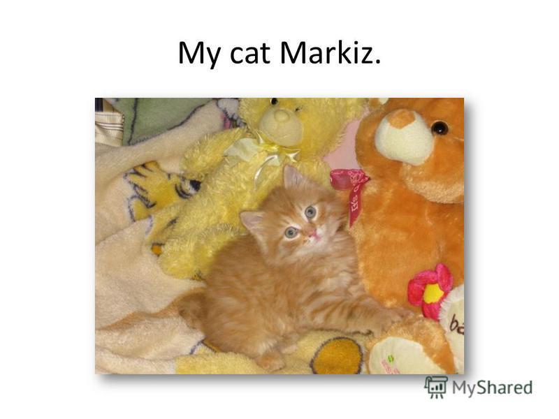 My cat Markiz.