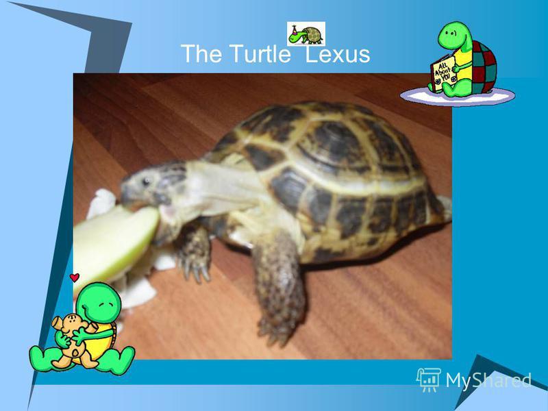 The Turtle Lexus
