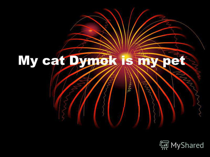 My cat Dymok is my pet