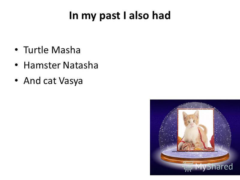 In my past I also had Turtle Masha Hamster Natasha And cat Vasya