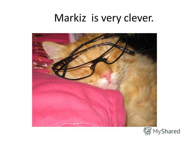 Markiz is very clever.