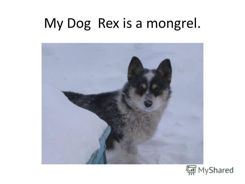 My Dog Rex is a mongrel.