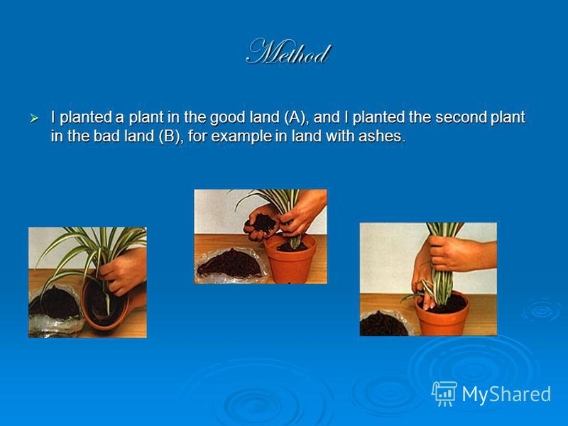 Method I planted a plant in the good land (A), and I planted the second plant in the bad land (B), for example in land with ashes. I planted a plant in the good land (A), and I planted the second plant in the bad land (B), for example in land with as
