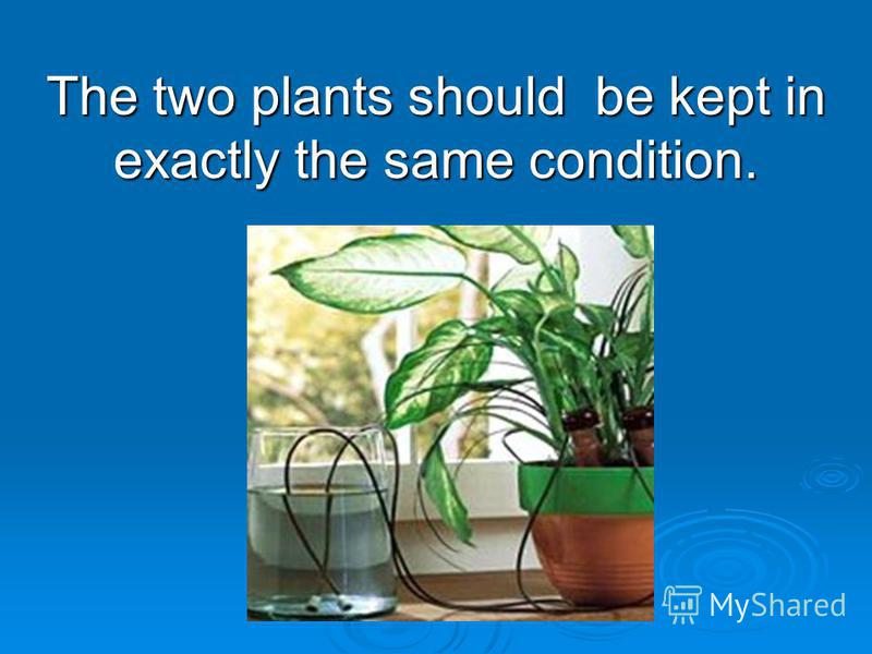 The two plants should be kept in exactly the same condition.