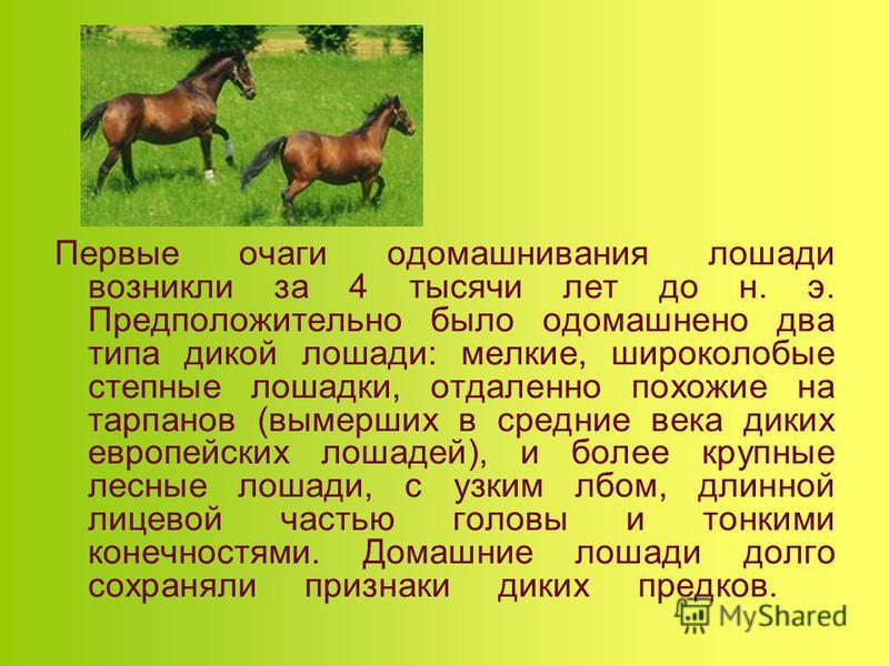 Первые очаги одомашнивания лошади возникли за 4 тысячи лет до н. э. Предположительно было одомашнено два типа дикой лошади: мелкие, широколобые степные лошадки, отдаленно похожие на тарпанов (вымерших в средние века диких европейских лошадей), и боле