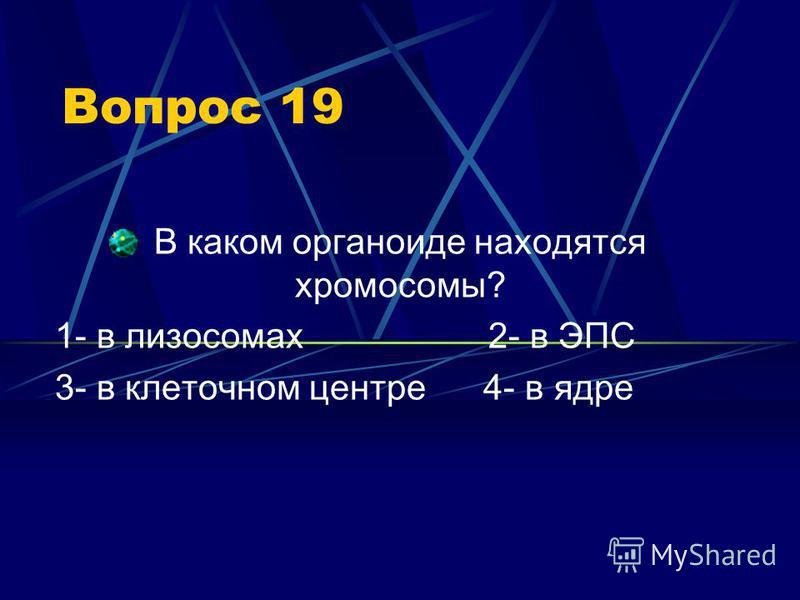 Вопрос 19 В каком органоиде находятся хромосомы? 1- в лизосомах 2- в ЭПС 3- в клеточном центре 4- в ядре
