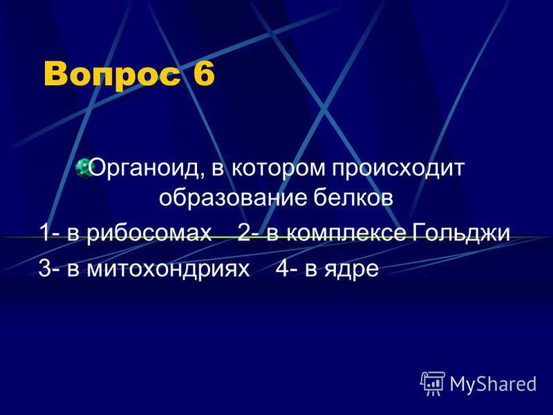 Вопрос 6 Органоид, в котором происходит образование белков 1- в рибосомах 2- в комплексе Гольджи 3- в митохондриях 4- в ядре