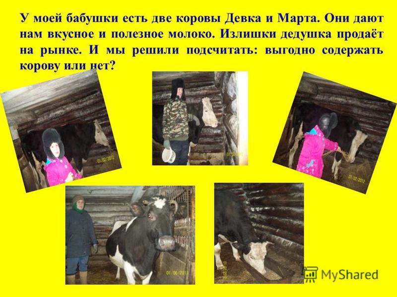 У моей бабушки есть две коровы Девка и Марта. Они дают нам вкусное и полезное молоко. Излишки дедушка продаёт на рынке. И мы решили подсчитать: выгодно содержать корову или нет?