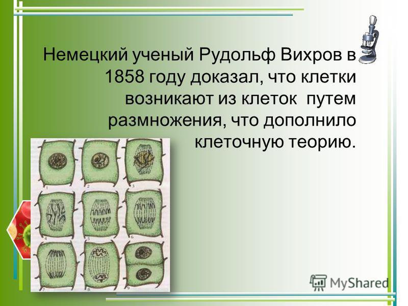 Немецкий ученый Рудольф Вихров в 1858 году доказал, что клетки возникают из клеток путем размножения, что дополнило клеточную теорию.