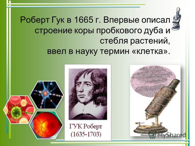 Роберт Гук в 1665 г. Впервые описал строение коры пробкового дуба и стебля растений, ввел в науку термин «клетка».