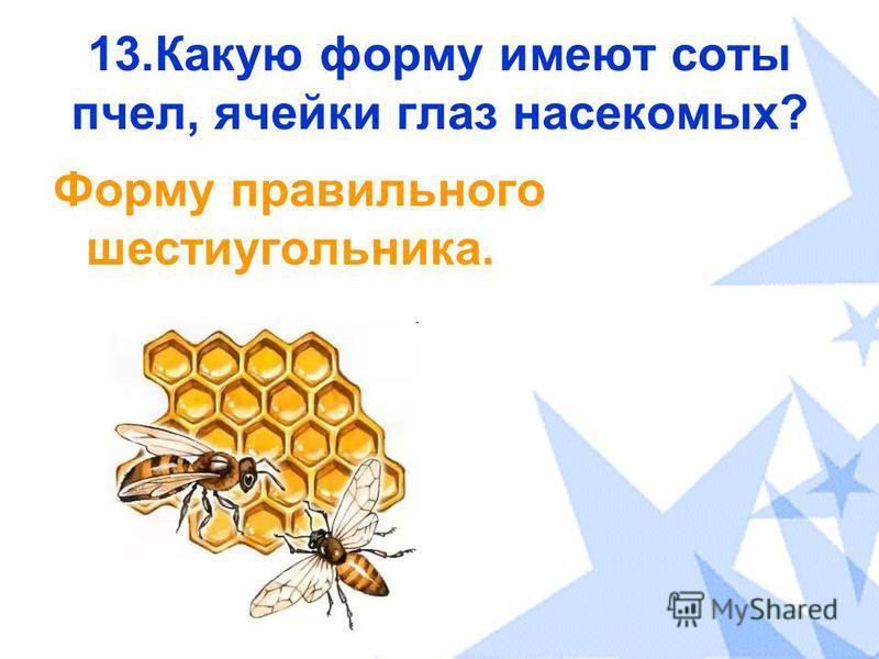13. Какую форму имеют соты пчел, ячейки глаз насекомых? Форму правильного шестиугольника.