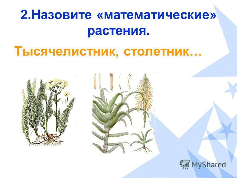 2. Назовите «математические» растения. Тысячелистник, столетник…