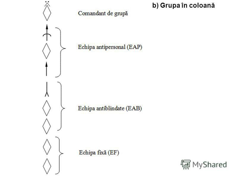 b) Grupa în coloană