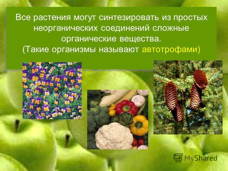 Все растения могут синтезировать из простых неорганических соединений сложные органические вещества. (Такие организмы называют автотрофами)