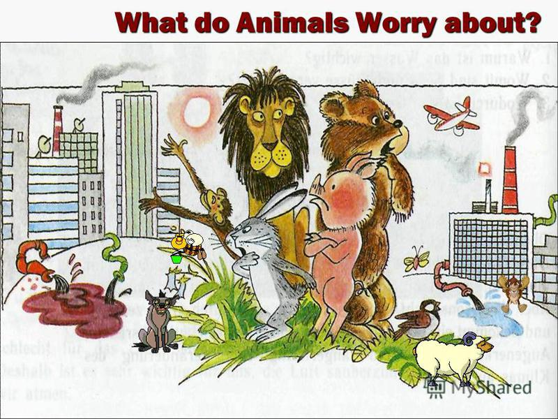 What do Animals Worry about? What do Animals Worry about?