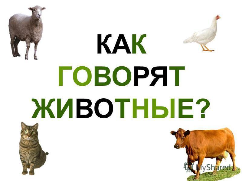 Скачать звуки животных корова