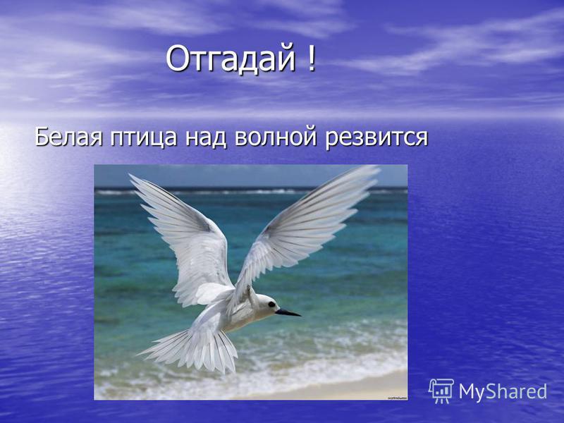 Отгадай ! Белая птица над волной резвится
