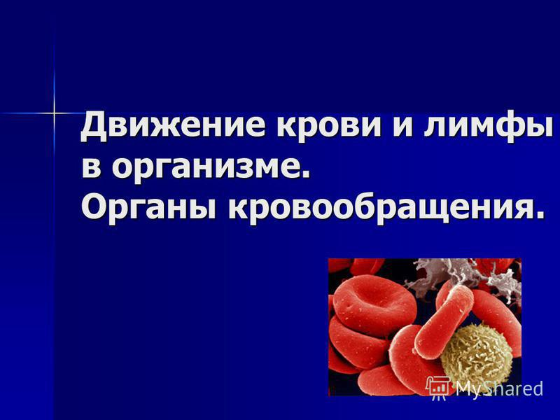 Движение крови и лимфы в организме. Органы кровообращения.