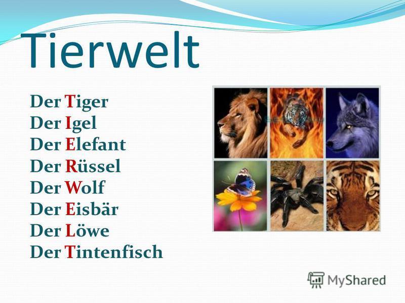 Tierwelt Der Tiger Der Igel Der Elefant Der Rüssel Der Wolf Der Eisbär Der Löwe Der Tintenfisch
