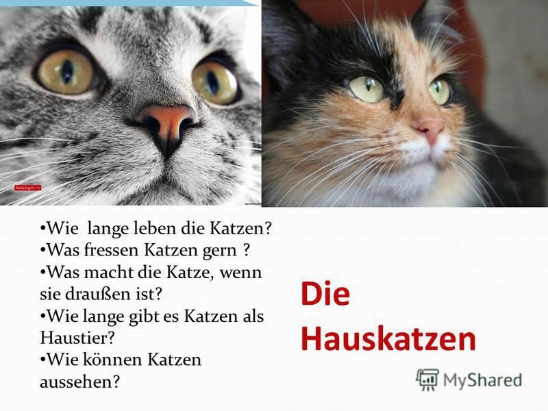 Die Hauskatzen Wie lange leben die Katzen? Was fressen Katzen gern ? Was macht die Katze, wenn sie draußen ist? Wie lange gibt es Katzen als Haustier? Wie können Katzen aussehen?