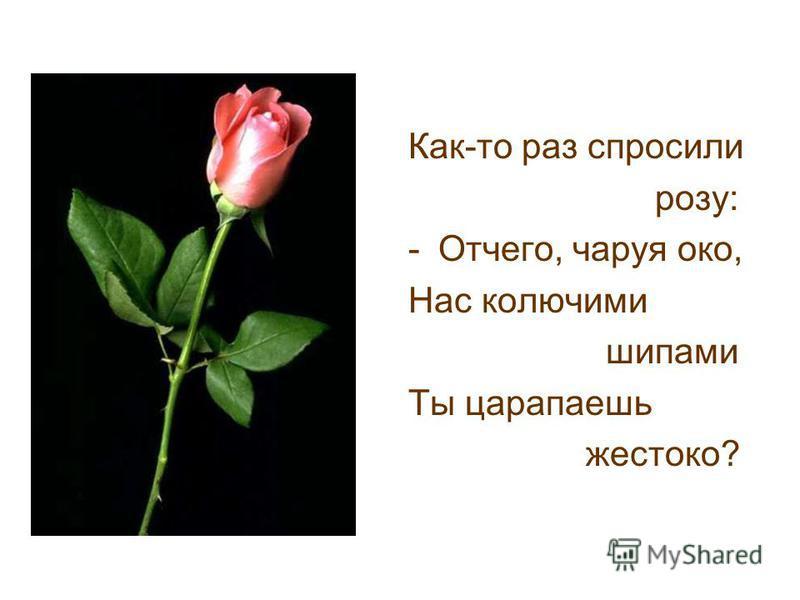 Как-то раз спросили розу: -Отчего, чаруя око, Нас колючими шипами Ты царапаешь жестоко?
