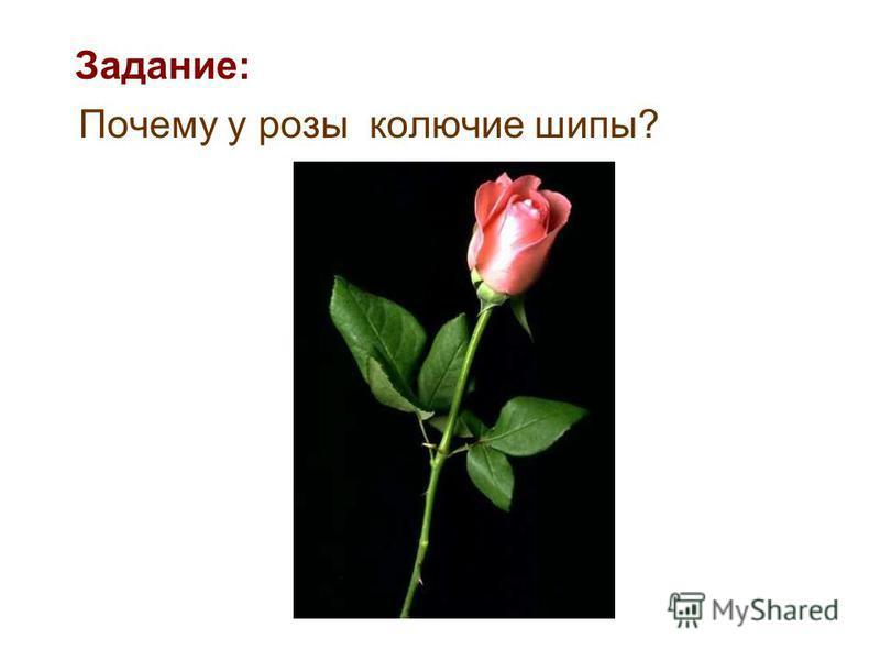Почему у розы колючие шипы? Задание: