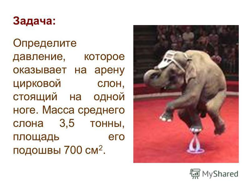 Задача: Определите давление, которое оказывает на арену цирковой слон, стоящий на одной ноге. Масса среднего слона 3,5 тонны, площадь его подошвы 700 см 2.