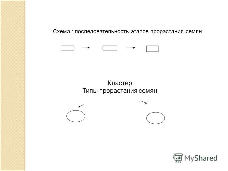 Схема : последовательность этапов прорастания семян Кластер Типы прорастания семян