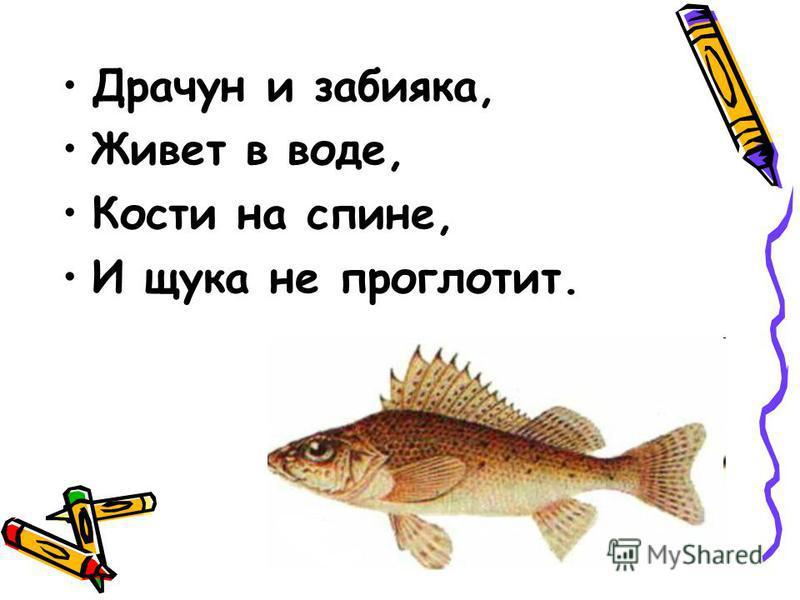 Драчун и забияка, Живет в воде, Кости на спине, И щука не проглотит.