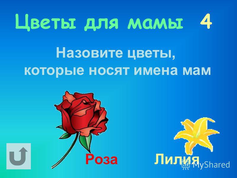 Цветы для мамы 4 Назовите цветы, которые носят имена мам Роза Лилия