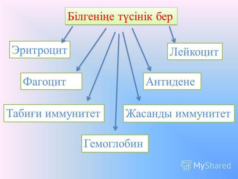 Білгеніңе түсінік бер Эритроцит Лейкоцит ФагоцитАнтидене Табиғи иммунитет Жасанды иммунитет Гемоглобин