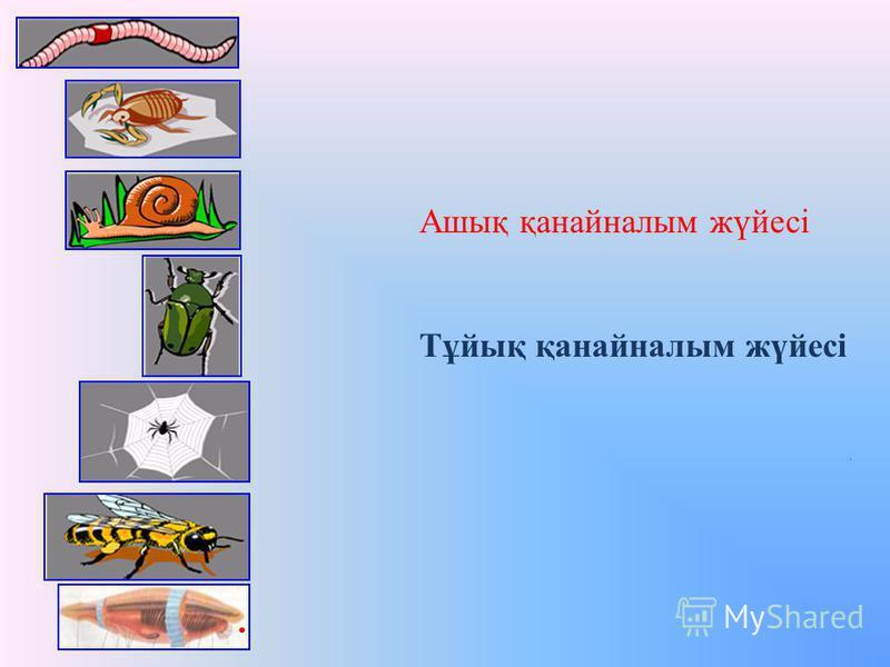 Ашық қанайналым жүйесі Тұйық қанайналым жүйесі