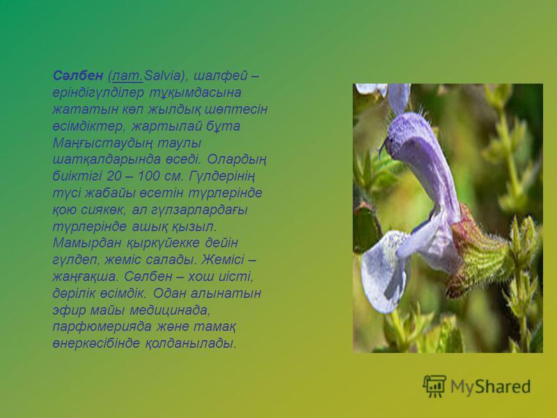 Сәлбен (лат.Salvia), шалфей – еріндігүлділер тұқымдасына жататын көп жылдық шөптесін өсімдіктер, жартылай бұта Маңғыстаудың таулы шатқалдарында өседі. Олардың биіктігі 20 – 100 см. Гүлдерінің түсі жабайы өсетін түрлерінде қою сиякөк, ал гүлзарлардағы
