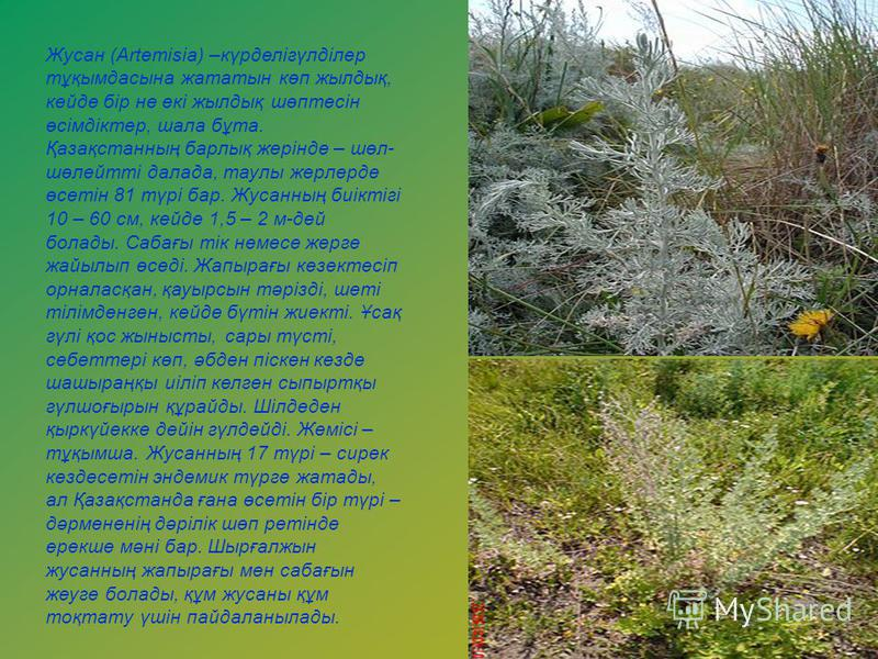 Жусан (Artemіsіa) –күрделігүлділер тұқымдасына жататын көп жылдық, кейде бір не екі жылдық шөптесін өсімдіктер, шала бұта. Қазақстанның барлық жерінде – шөл- шөлейтті далада, таулы жерлерде өсетін 81 түрі бар. Жусанның биіктігі 10 – 60 см, кейде 1,5