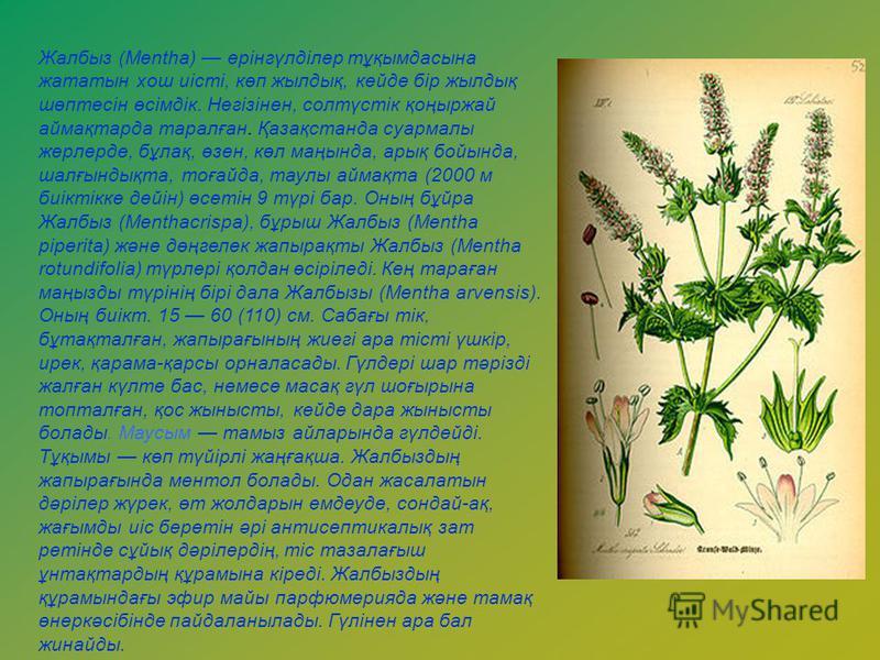 Жалбыз (Mentha) ерінгүлділер тұқымдасына жататын хош иісті, көп жылдық, кейде бір жылдық шөптесін өсімдік. Негізінен, солтүстік қоңыржай аймақтарда таралған. Қазақстанда суармалы жерлерде, бұлақ, өзен, көл маңында, арық бойында, шалғындықта, тоғайда,