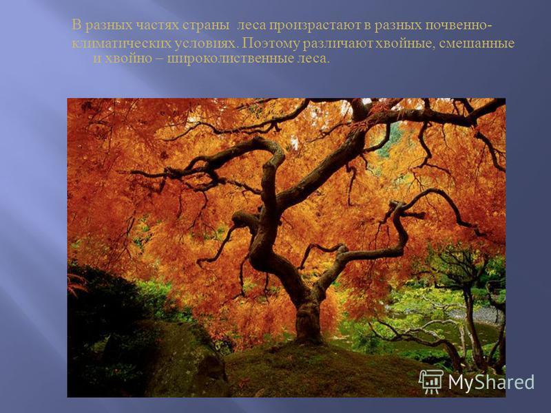 В разных частях страны леса произрастают в разных почвенно - климатических условиях. Поэтому различают хвойные, смешанные и хвойно – широколиственные леса.