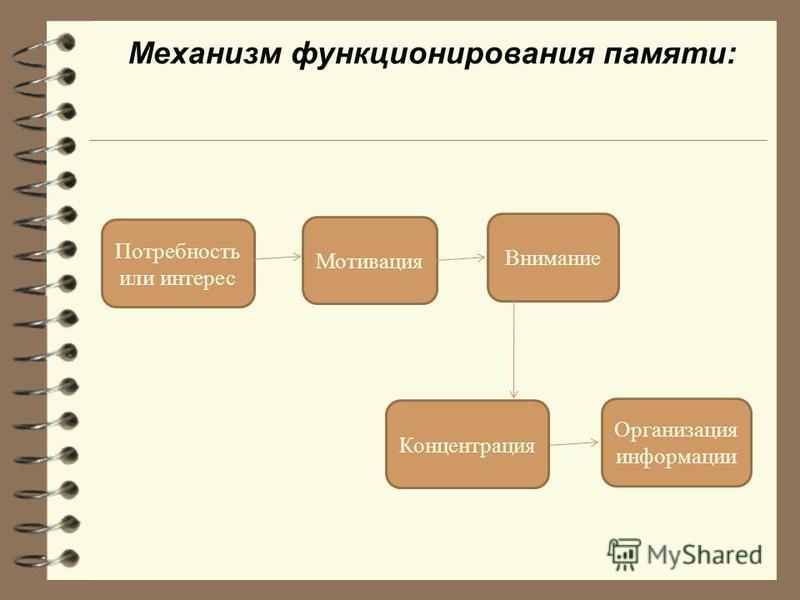 Механизм функционирования памяти: Потребность или интерес Мотивация Внимание Концентрация Организация информации