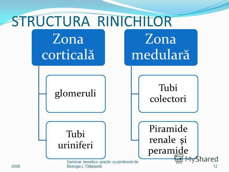 STRUCTURA RINICHILOR Zona corticală glomeruli Tubi uriniferi Zona medulară Tubi colectori Piramide renale şi peramide 12 Seminar teoretico- practic cu profesorii de Biologie,L.T.Malaesti.2008
