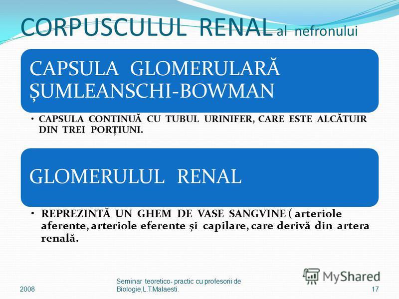 CORPUSCULUL RENAL al nefronului CAPSULA GLOMERULARĂ ŞUMLEANSCHI-BOWMAN CAPSULA CONTINUĂ CU TUBUL URINIFER, CARE ESTE ALCĂTUIR DIN TREI PORŢIUNI. GLOMERULUL RENAL REPREZINTĂ UN GHEM DE VASE SANGVINE ( arteriole aferente, arteriole eferente şi capilare