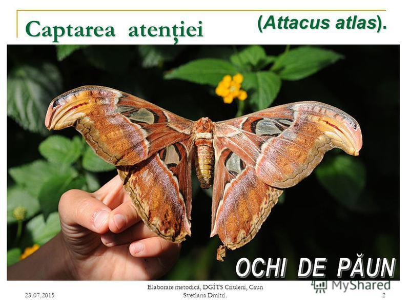23.07.2015 Elaborare metodică, DGÎTS Criuleni, Caun Svetlana Dmitri. 2 Captarea atenţiei (Attacus atlas).