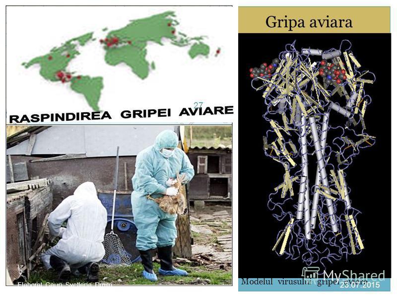 Gripa aviara Modelul virusului gripei aviare 23.07.2015 27 Elaborat Caun Svetlana Dmitri.