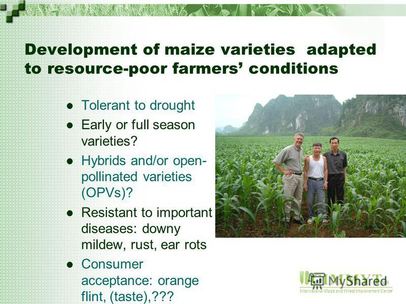 C I M M Y T MR International Maize and Wheat Improvement Center Development of maize varieties adapted to resource-poor farmers conditions Tolerant to drought Early or full season varieties? Hybrids and/or open- pollinated varieties (OPVs)? Resistant
