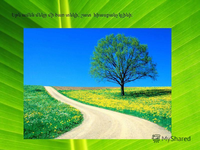 Եթե ամեն մեկը մի ծառ տնկի, շատ հիասքանչ կլինի: