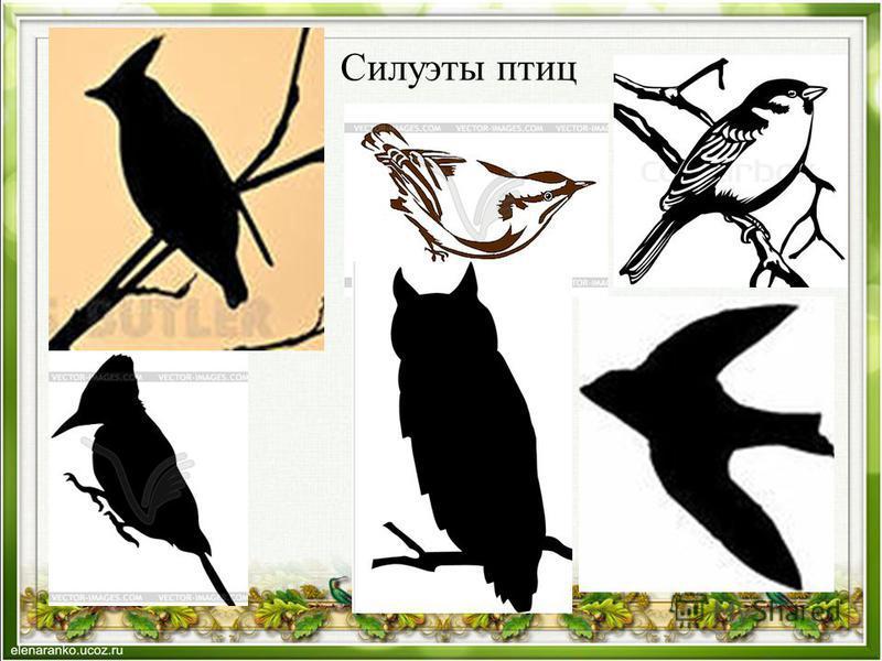 Силуэты птиц