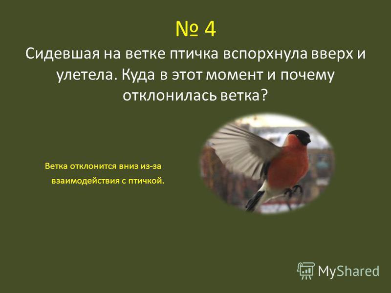 4 Сидевшая на ветке птичка вспорхнула вверх и улетела. Куда в этот момент и почему отклонилась ветка? Ветка отклонится вниз из-за взаимодействия с птичкой.