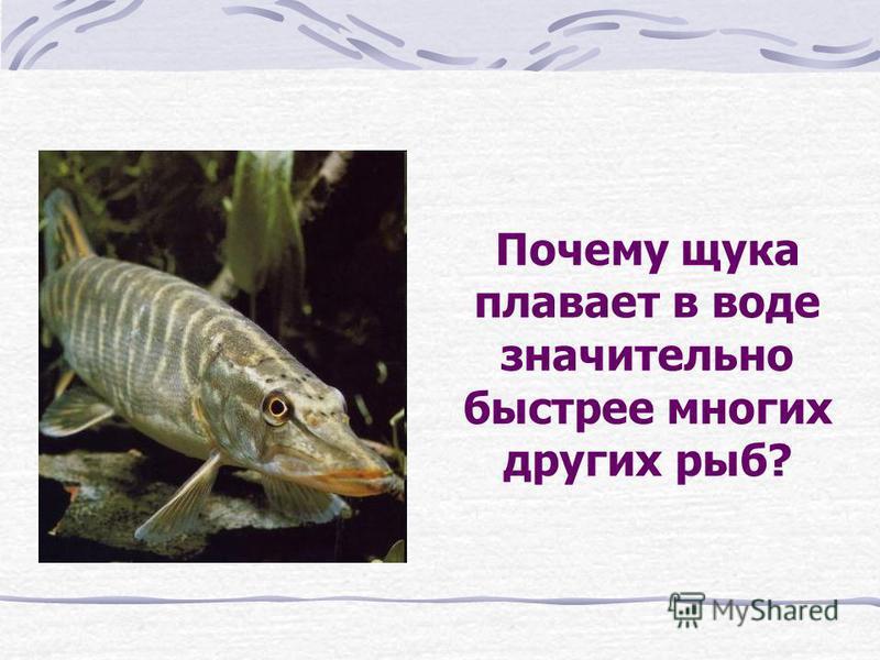Почему водолазная собака легко вытаскивает тонущего из воды, но дотащив его до берега не может сдвинуть даже с места?