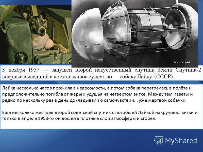 3 ноября 1957 запущен второй искусственный спутник Земли Спутник-2 впервые выведший в космос живое существо собаку Лайку. (СССР). Лайка несколько часов прожила в невесомости, а потом собака перегрелась в полёте и предположительно погибла от жары и уд