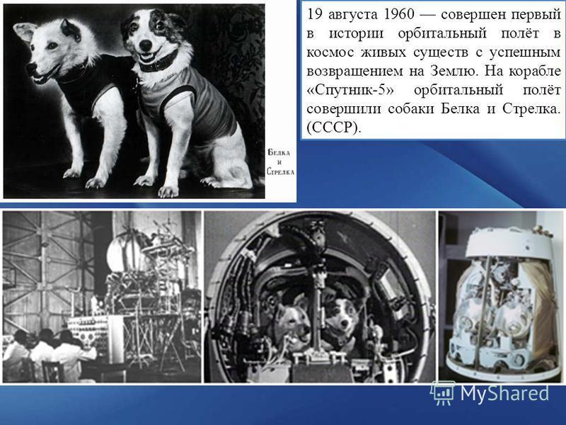19 августа 1960 совершен первый в истории орбитальный полёт в космос живых существ с успешным возвращением на Землю. На корабле « Спутник-5 » орбитальный полёт совершили собаки Белка и Стрелка. (СССР).