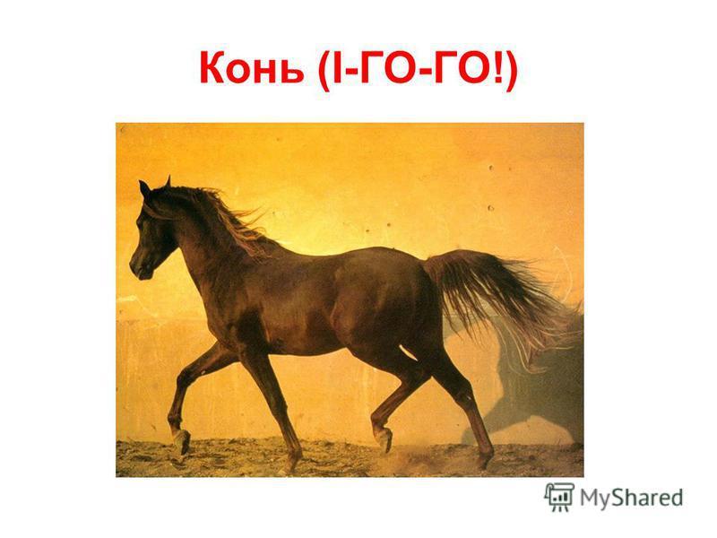 Конь (І-ГО-ГО!)