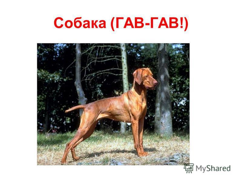 Собака (ГАВ-ГАВ!)